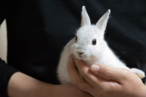 ウサギ ネザー