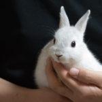 ウサギ ネザーランドドワーフ